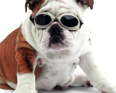 doggles_3_cropped.jpg